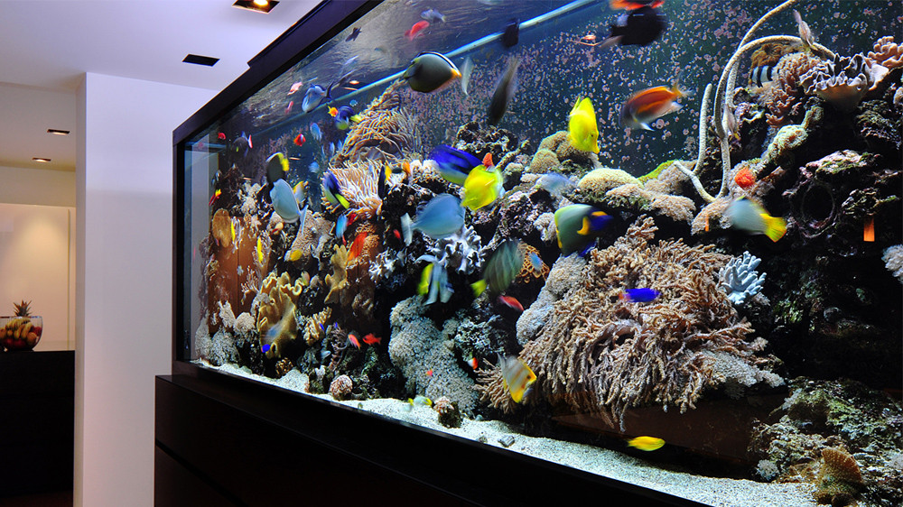 Comment nettoyer le fond d'un aquarium
